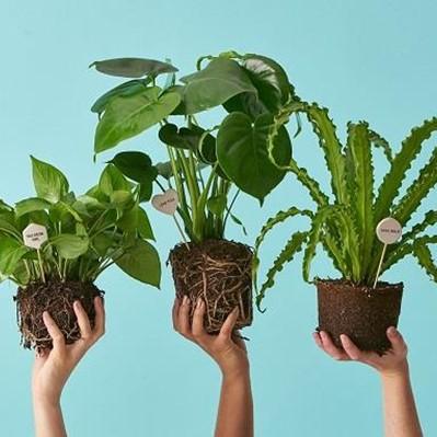 6 گیاه خنک کننده هوای خانه در تابستان